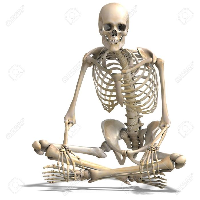 8907034-anatomical-correct-male-skeleton-3d-rendering-stock-photo-skeleton-skull-human